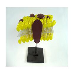 Модель строения клеточной оболочки