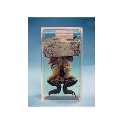 Влажный препарат «Внутреннее строение лягушки»