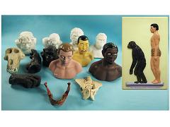 Комплект палеонтологических моделей