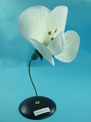 Демонстрационная модель цветка гороха
