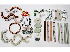 Строение клетки (набор из 54 пластмассовых фигур на магнитах)