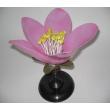 Демонстрационная модель цветка персика