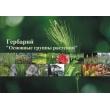 Гербарий «Основные группы растений»